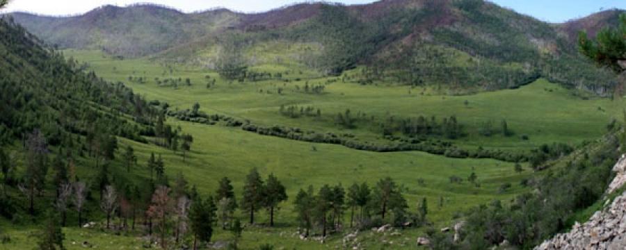 56.5 га талбайд ургуулсан таримал ойг төр худалдан аваад байна