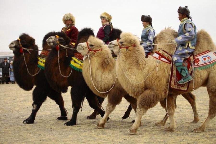 Тэмээний баяр зурган илэрцүүд