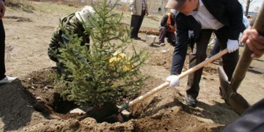 Ялалтын баярын өдөр бүх нийтээрээ мод тарина