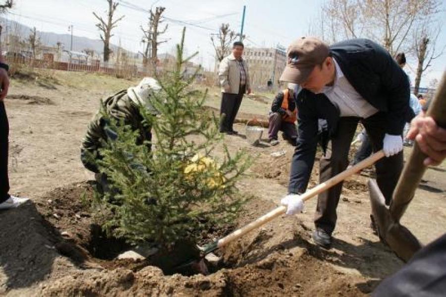 Тарьсан мод нь хэзээ ургадаг болох вэ?