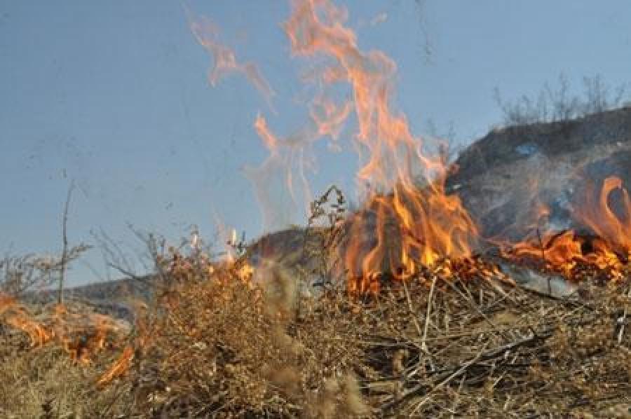 Хөвсгөлийн Ренчинлхүмбэ сумаас 60 км зайд ойн түймэр гарчээ