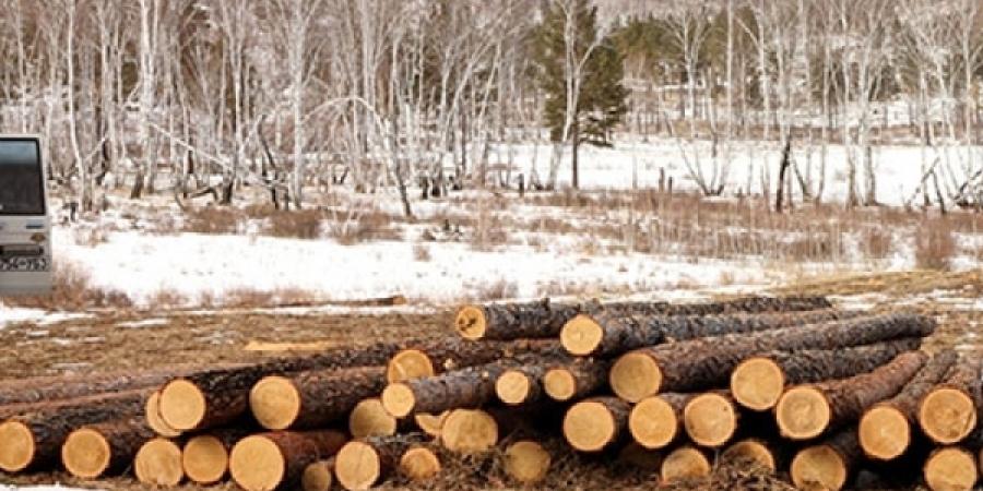 Энэ онд нийслэлийн ногоон бүсийн ойн нийт 244 га газраас мод бэлтгэнэ