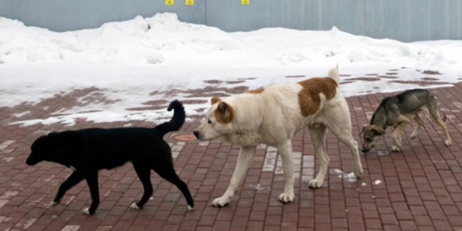 Золбин нохой, муур устгалын ажлыг эрчимжүүллээ
