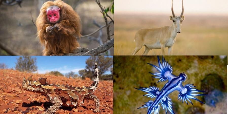 Дэлхий дээр амьдардаг хамгийн сонирхолтой ер бусын амьтад
