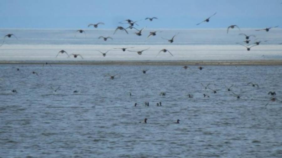 Увс нуурын ай сав газарт 22246 шувуу байгааг бүртгэжээ