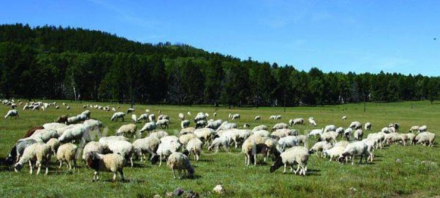 Монгол улс түүхэндээ анх удаа 73 сая малтай боллоо