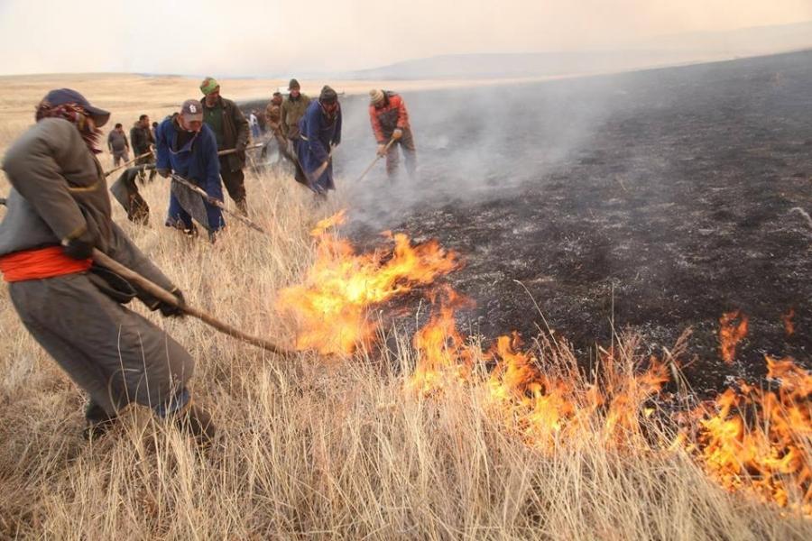 Он гарсаар 21 мянган га ой түймэрт өртжээ