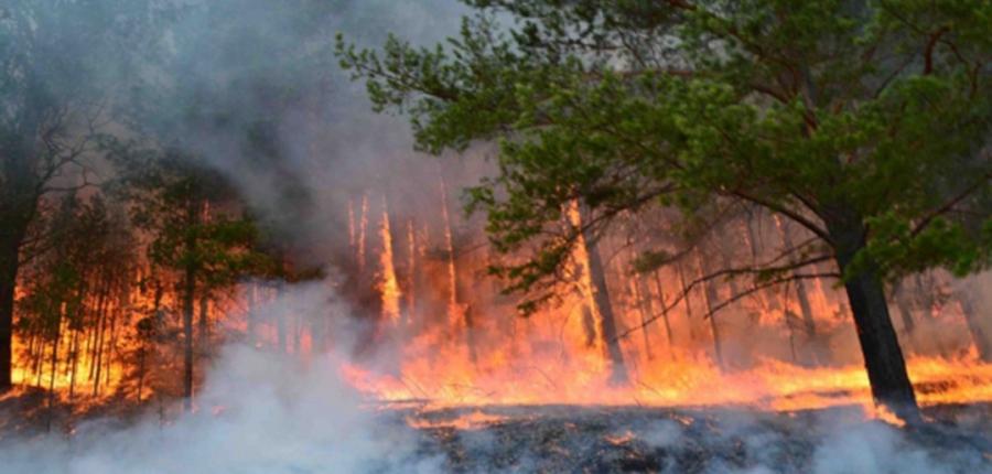 Он гарсаар ой, хээрийн түймрийн 99 тохиолдол бүртгэгдээд байна