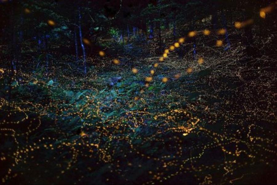 Ойн гэрэлт цохнууд