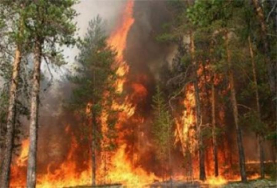 Томск, Эрхүү, мужуудад ойн түймэр дүрэлзсээр байна