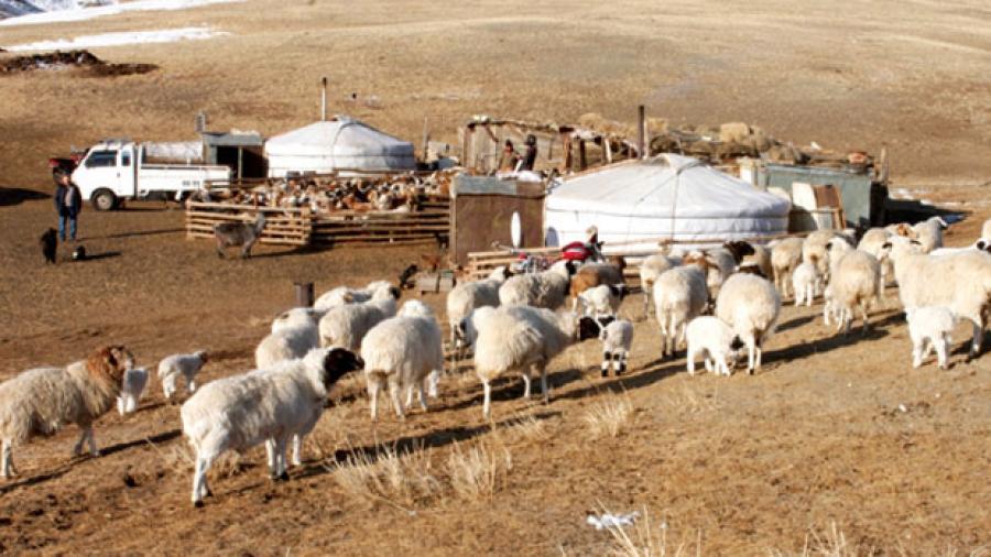 Дөрвөн аймагт хонины цэцэг өвчний хорио цээрийн дэглэм үйлчилж байна
