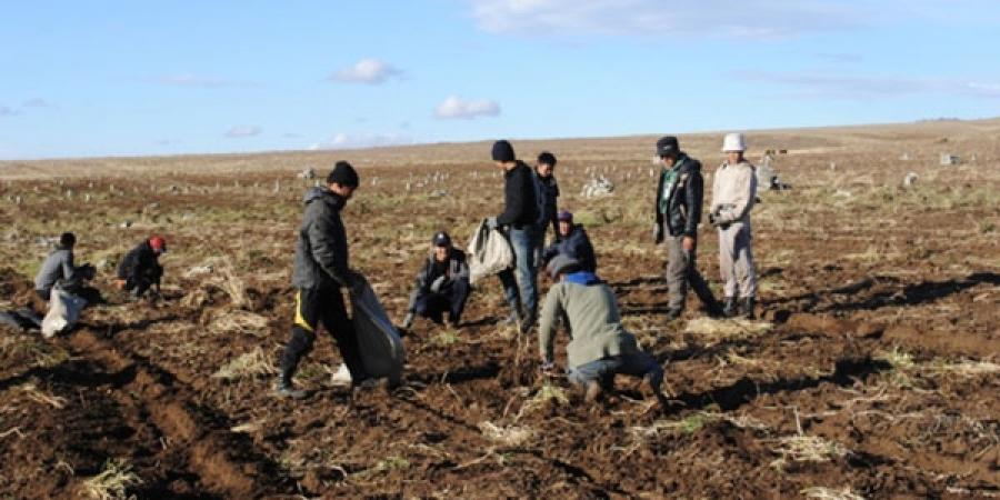 Монголын хөрсөнд ч хортой ногоо ургаж байна уу