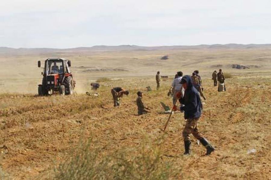 Ургац хураалтын ажилд 1200 гаруй цэргийн албан хаагч оролцож байна