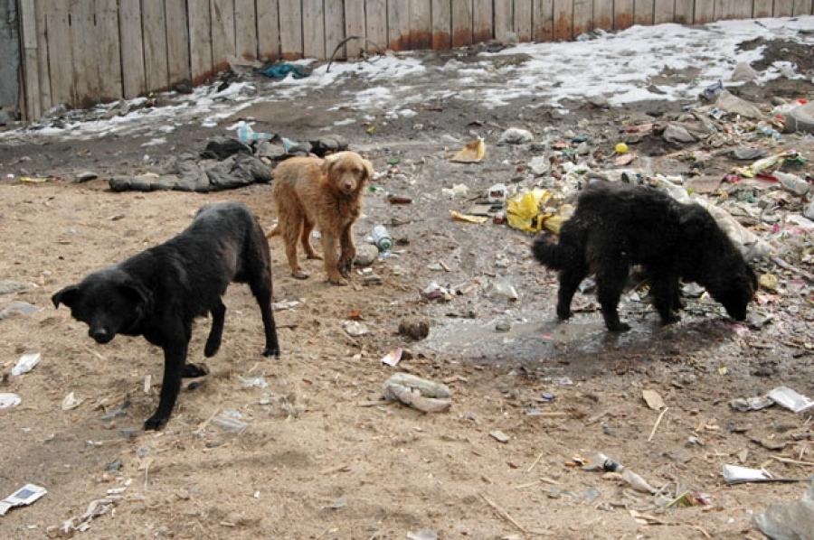 Золбин нохой устгалд жилд хэчнээн төгрөг зарцуулдаг вэ?