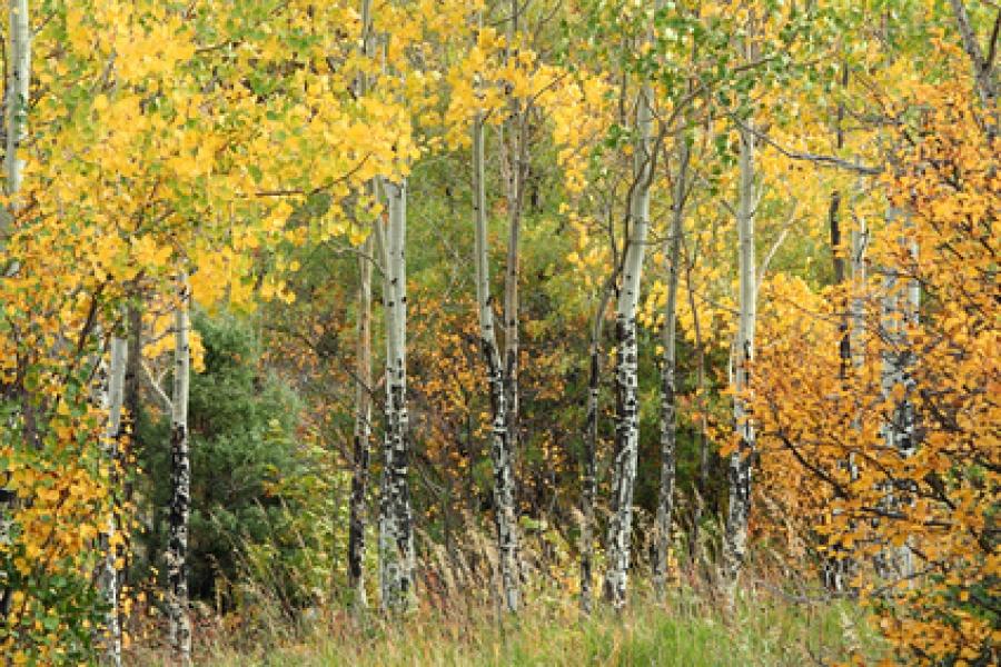 Толгойтоос Амгалан өртөө хүртэл 8000 улиас мод тарина
