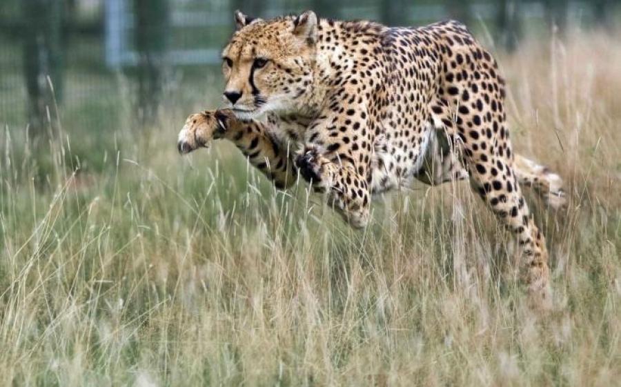 Дэлхий дээрх зэрлэг амьтдын тоо толгой 58 хувиар буурчээ