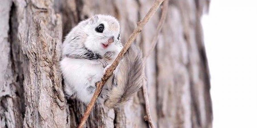 ФОТО: Дэлхийн хамгийн хөөрхөн амьтан