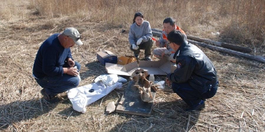Хонгор сумаас палеонтологийн шинэ олдвор олджээ