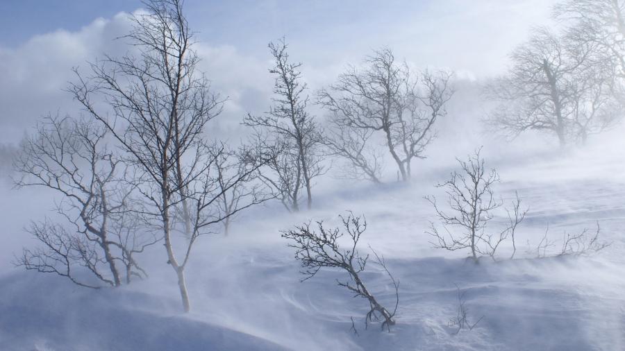 Нутгийн зүүн хагаст цас орж, шуурна