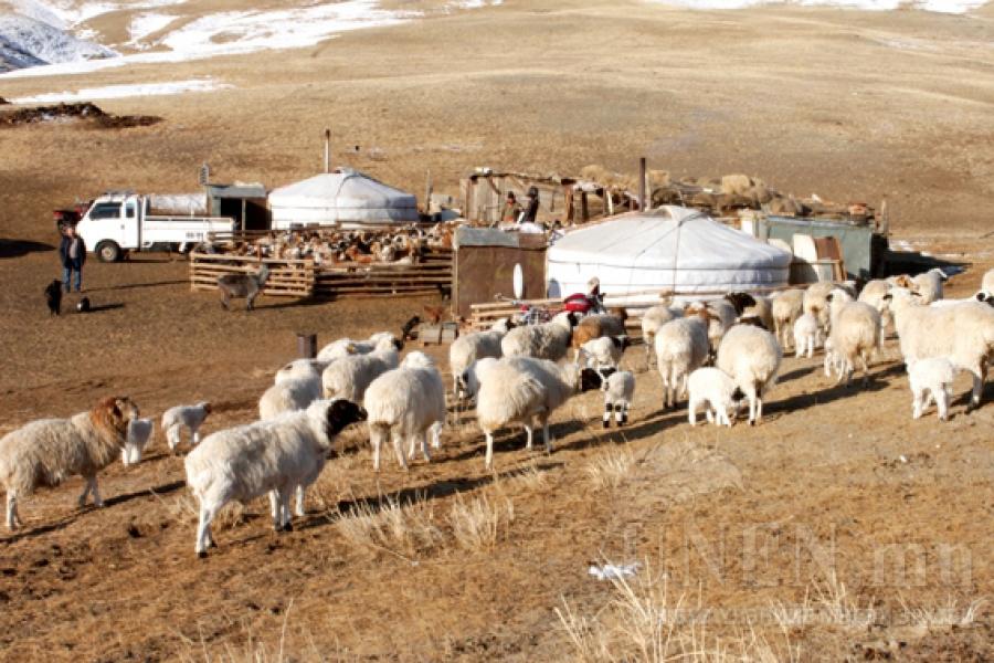 Хоттой хонь нь харласан малчид нийслэл рүү хөдлөхийн цагт...