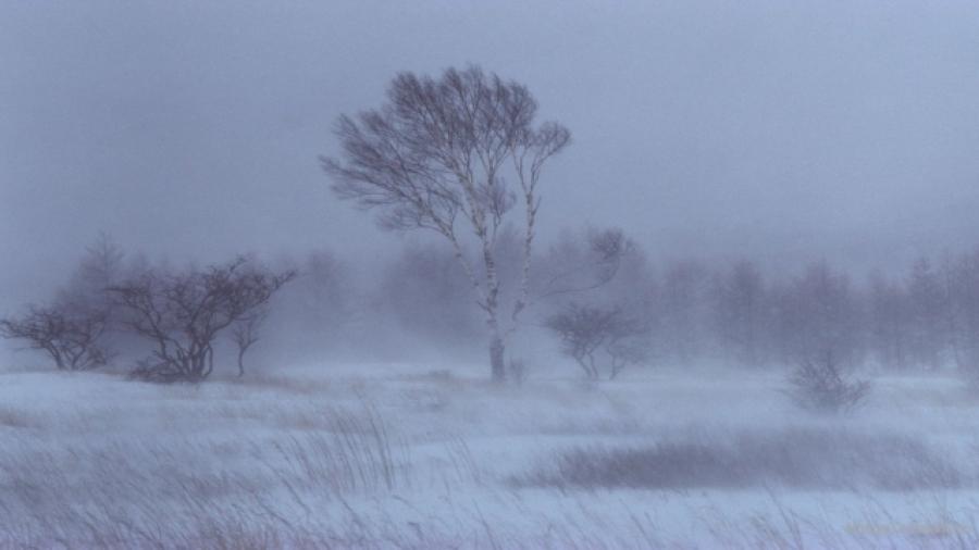 Өнөө  шөнө говийн аймгуудын нутгаар цасан шуургатай