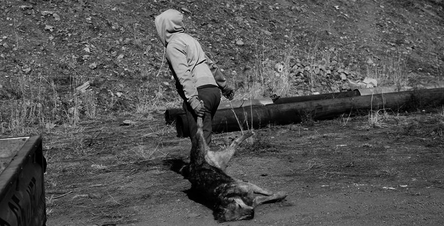 Богд Хан ууланд золбин нохой олширчээ
