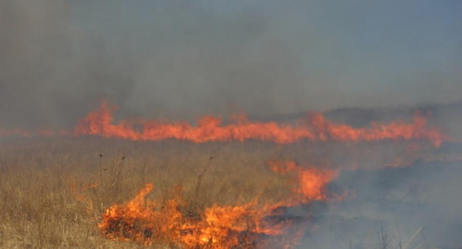 Залаатын аманд түймэр гарчээ