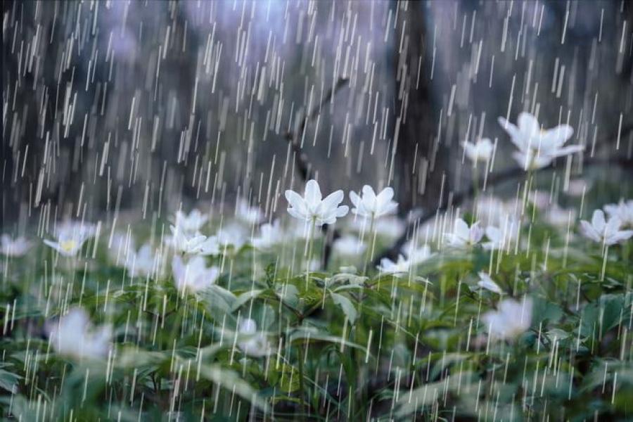 Нутгийн зарим хэсгээр бороо орно