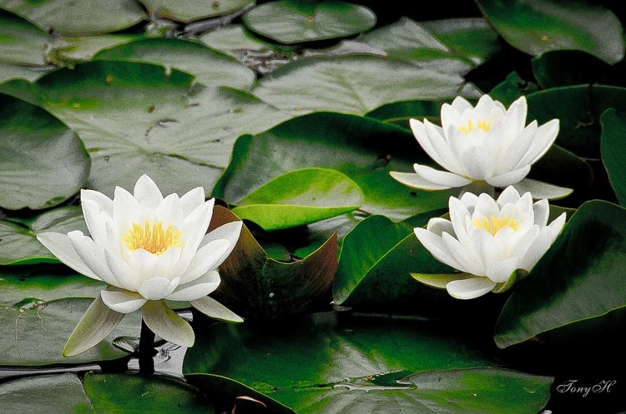 Ховор тархацтай зарим цэцэг устах аюул нүүрлэж байна гэв