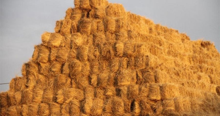 ОХУ-аас 400 мянган тн өвс, тэжээл авна