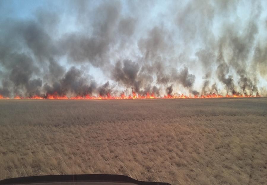 Дорнод аймагт түймэр гарчээ