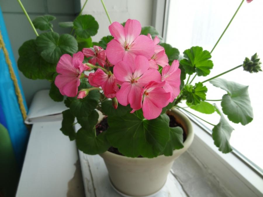 Цэцэг тарих энгийн аргууд