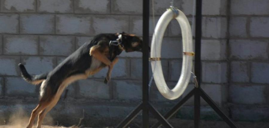 Эрэлч нохой бэлтгэх сургалт эхэллээ