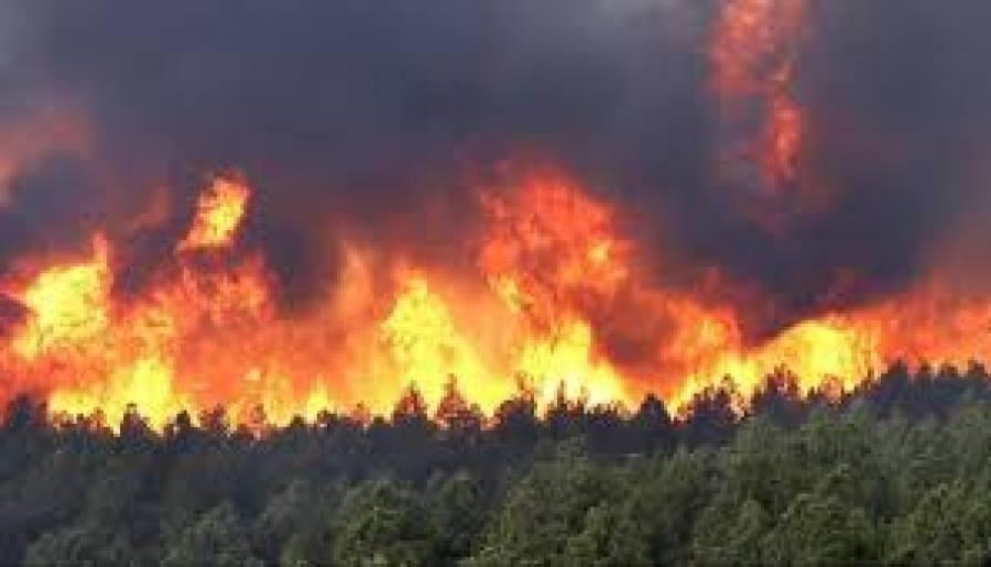 84750 га талбай түймэрт өртжээ