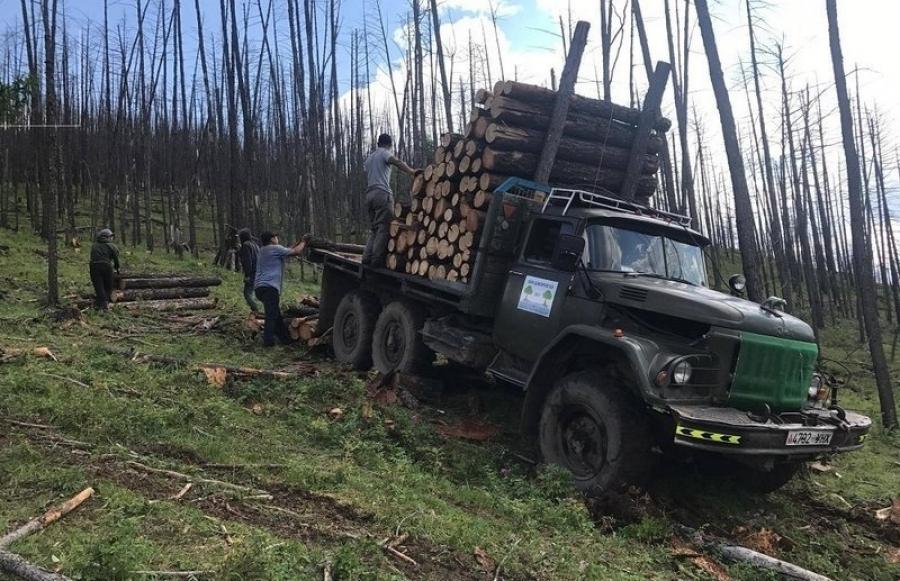 Нийслэлийн ойгоос 6100м.куб мод бэлтгэнэ