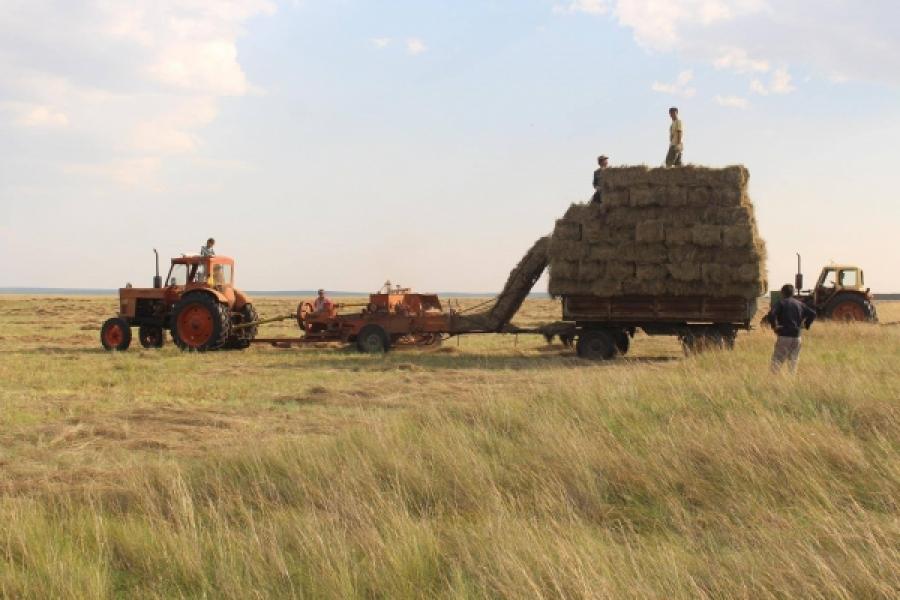 Аймаг, сумдын аюулгүй нөөцөд 1400 тонн өвс, 720 тонн гар тэжээл бэлтгэнэ