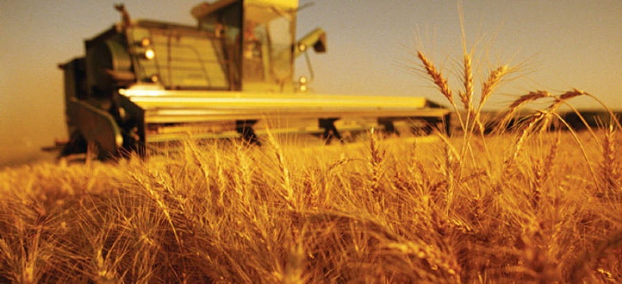 Улсын хэмжээнд ургац хураалт 80 хувьтай явж байна
