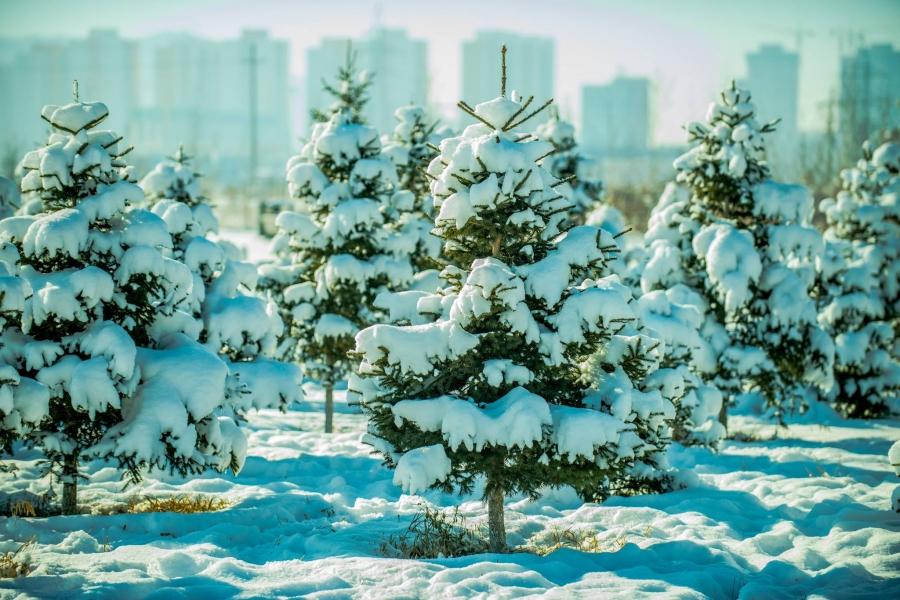 Ихэнх нутгаар цас орж, хүйтэрнэ