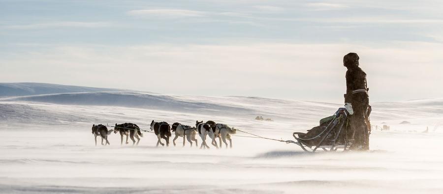 Монгол залуус нохойтой чарганы аялалд өрсөлдөж байна