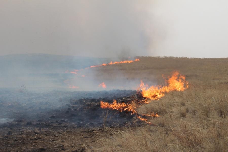 74 мянган га талбай түймэрт өртжээ