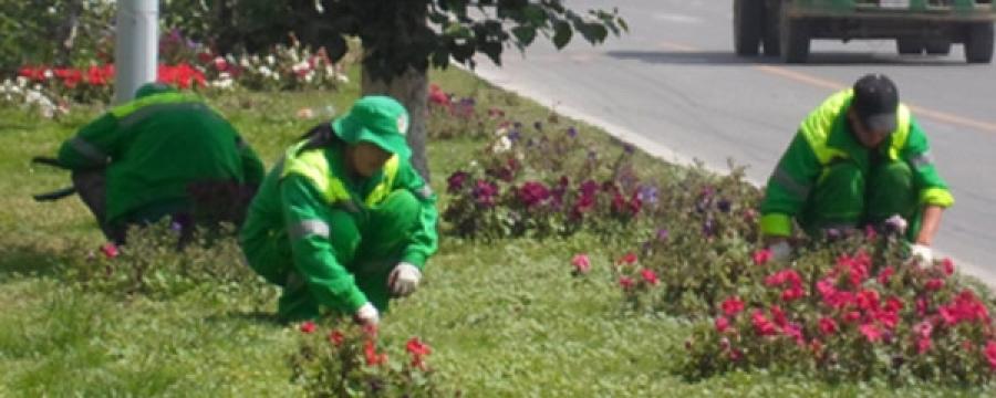 Мэргэжлийн 200 цэцэрлэгчийг бэлтгэж байна