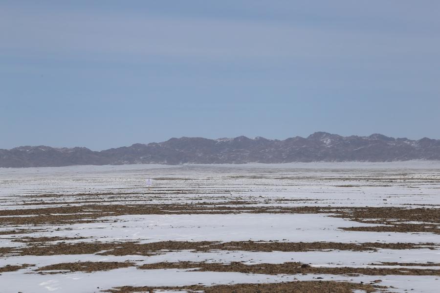 Говь-Алтай аймагт мал сүрэг өвс, тэжээлийн дутагдалд ороод байна
