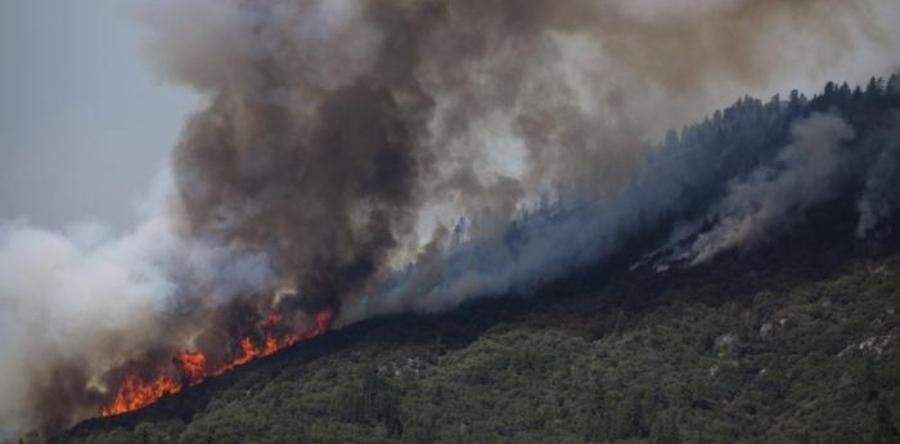 Түймрийн голомтод 290 гаруй хүн ажиллаж байна