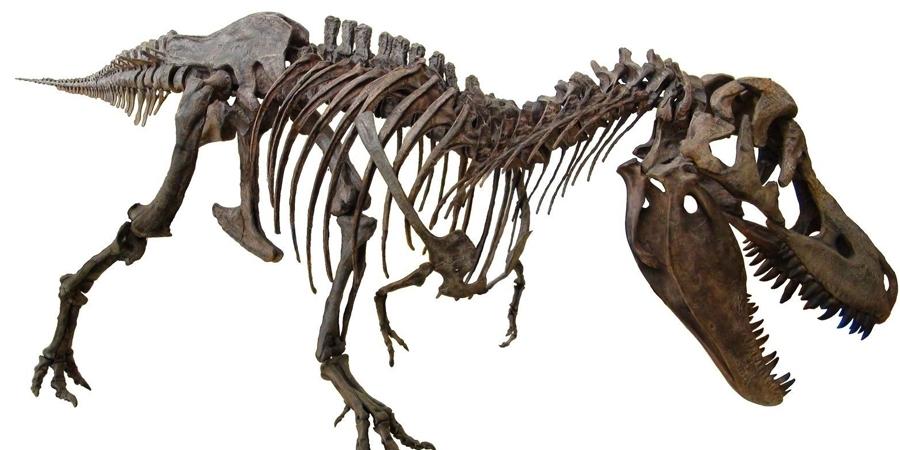 Азийн динозаврын олон улсын хурал болно