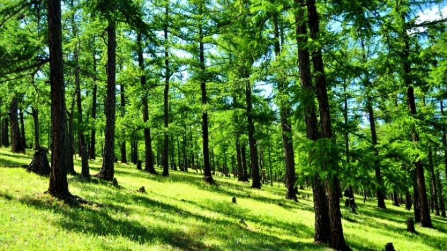 Өнөөдрийн байдлаар ой, хээрийн түймрийн дуудлага бүртгэгдээгүй байна