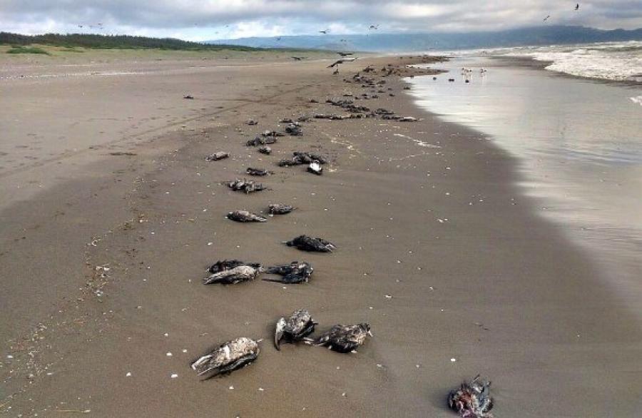Завхан аймагт үхсэн усны шувуудаас гоц халдварт өвчин илрээгүй