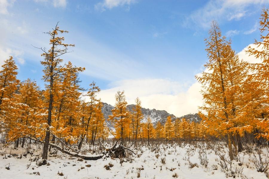 Нутгийн баруун хэсгээр цас орж, зөөлөн цасан шуурга шуурна
