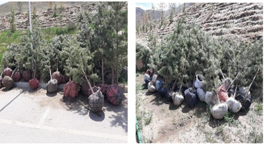 Ойгоос 400 ширхэг зулзаган нарс мод авч ирж бусдад худалдахыг завдсан хэргийг илрүүллээ