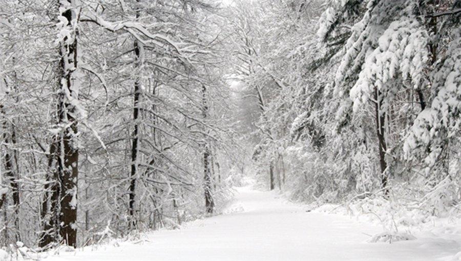 Зүүн аймгуудын нутгийн зүүн хэсгээр цас орж, цасан шуурга шуурна