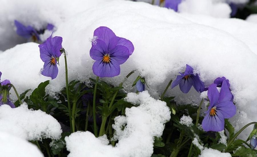 Өнөө маргаашдаа нутгийн зүүн хагаст бороо, уулархаг нутгаар нойтон цас орно